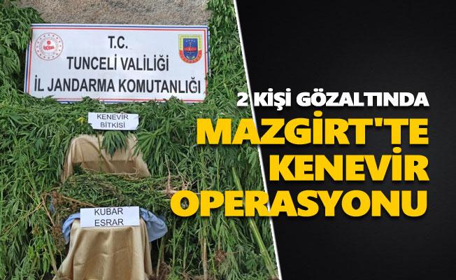 Mazgirt'te kenevir operasyonu: 2 kişi gözaltında
