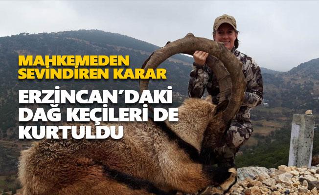 Erzincan'daki dağ keçileri de kurtuldu