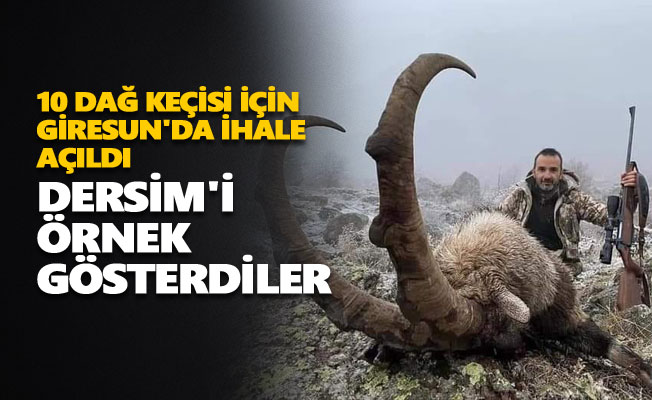 10 dağ keçisi için Giresun'da ihale açıldı