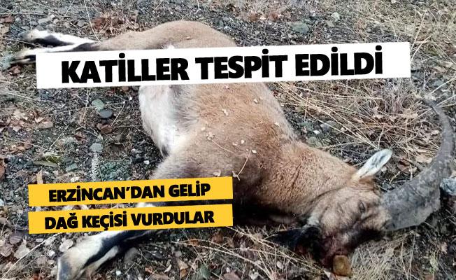 Dağ keçisi vuran katiller yakalandı