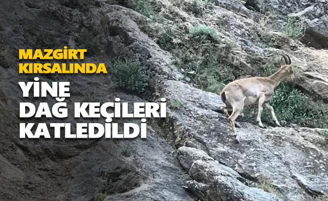 Mermi izi olmayan 8 dağ keçisi ölü bulundu