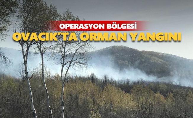 Ovacık'ta orman yangını
