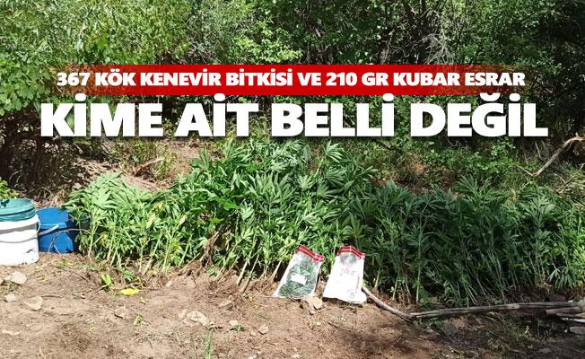 367 kök kenevir bitkisi ve 210 gr kubar esrar ele geçirildi