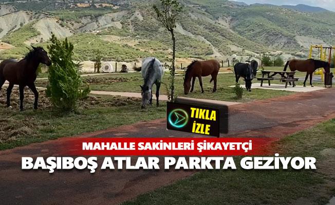 Başıboş atlar parkta geziyor