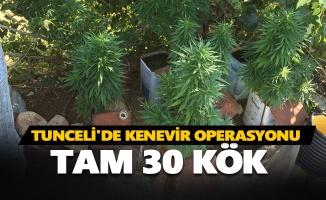 Tunceli'de kenevir operasyonu: Tam 30 kök...