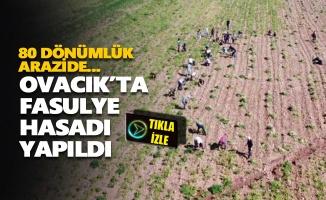Farklı mesleklerden kadınlar bir araya gelerek fasulye hasadına katıldı