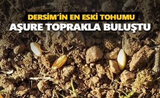 Dersim'in en eski tohumu aşure toprakla buluştu
