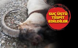 Munzur Vadisinde dağ keçisi vuranlara 55 bin lira para cezası