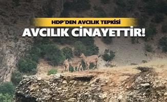 HDP'den avcılık tepkisi: Avcılık cinayettir!