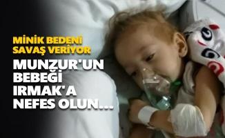 Munzur'un bebeği Irmak'a nefes olun…