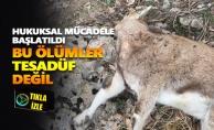 Yaban keçilerinin ölümüyle ilgili hukuksal mücadele başlatıldı